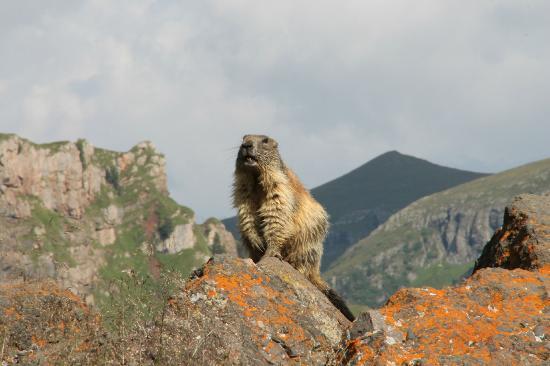 Hotel Roy: le marmotte...basta arrivare al fedaia