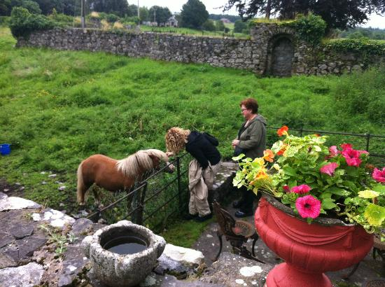 Ballyhannon Castle: Happy greetings from the pasture pony