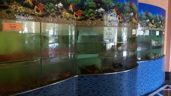 Hong Kong Flower Lounge: Live seafood tanks in the lobby (only half in this picture!)