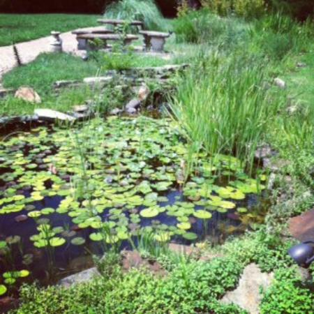 Blue Moon Farm Bed & Board: Lily pond off porch