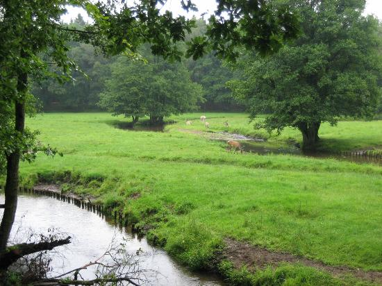 Bad Segeberg, Germany: view to an area with some deer, beautifully landscaped