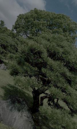 Kiyosumi Teien: 静か