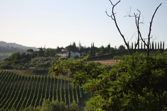Le Mandrie di Ripalta: View from farm grounds