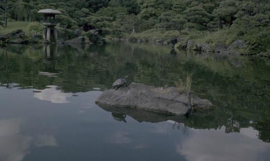 Kiyosumi Teien: 亀