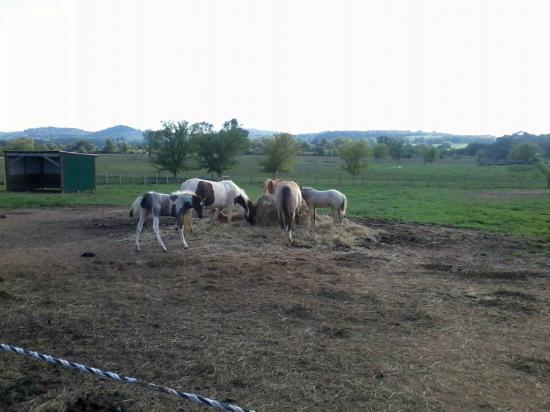 Clearview Horse Farm B&B: Mamas and babies
