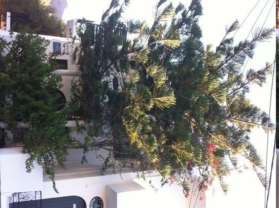 Palemilos Apartments: the beautifull (kind of) cedar