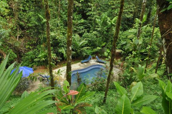 Casa Corcovado Jungle Lodge : adult pool