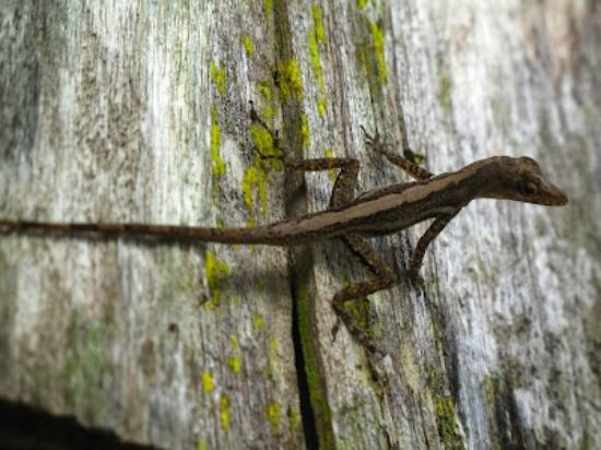 Fond Doux Plantation & Resort: We found this little guy outside by the parking lot.