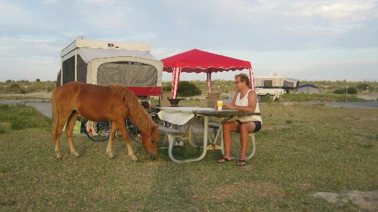 ‪‪Assateague State Park Camping‬: A visitor‬
