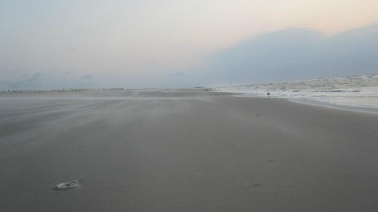 Assateague State Park Camping: The beach at sunrise