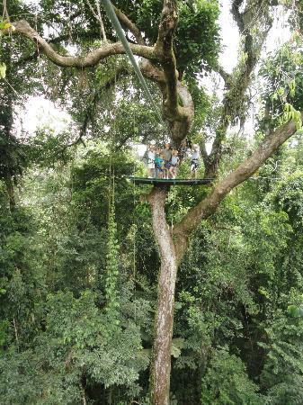 Parque Vista Arenal: Canopy