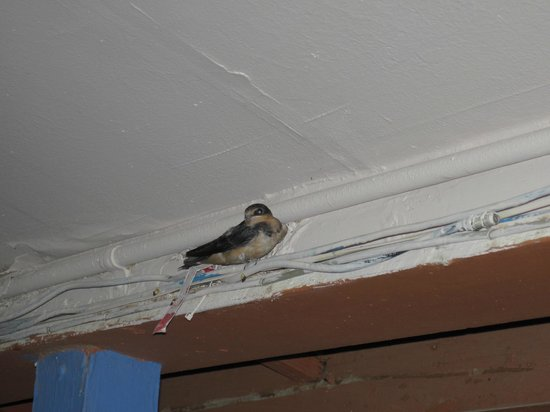 Logan Lodge :                                     Sweet, baby swallow above our door