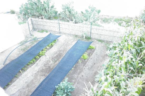 Refugio Romano: Área de Cultivo