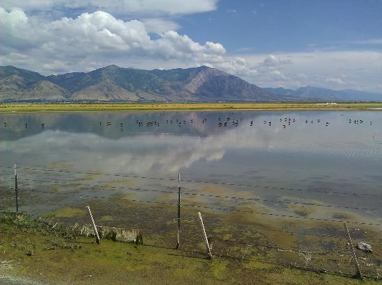 Brigham City, UT: Bear River Migratory Bird Refuge August 2011