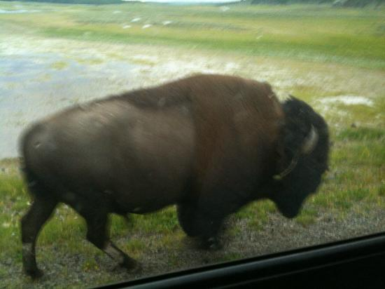Rimrock Ranch: Yellowstone