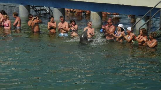 Delfinario en Cayo Santa Maria : Swim with the dolphins