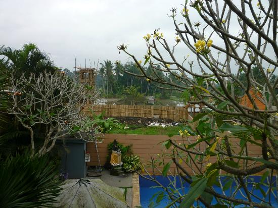 Putri Ayu Cottages: view July 2012