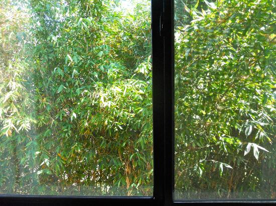 Quality Inn & Suites Oceanside: The view from our window: Shoulder to shoulder bamboo trees, daring the sun to enter