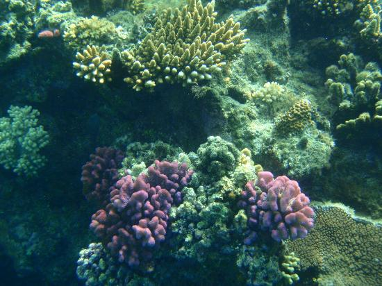 Likuliku Lagoon Resort: Coral at Honeymoon Island