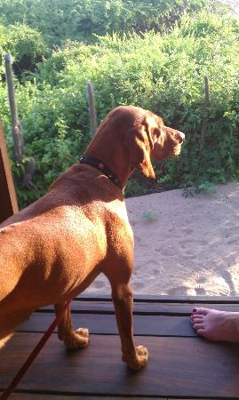 Playa Viva: our dog Lena looking out of our casita at the lizards