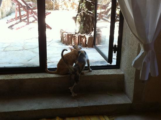 Kamares: la terrasse