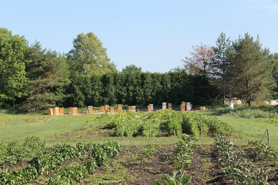 Lincolnshire Marriott Resort: Chef's Garden and Bee Hives