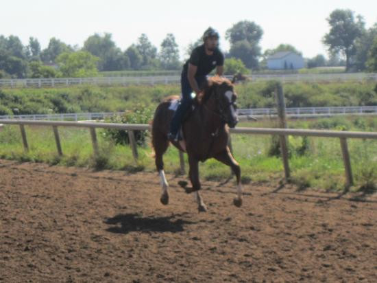 The Thoroughbred Center: one of the horses in training at full gallop
