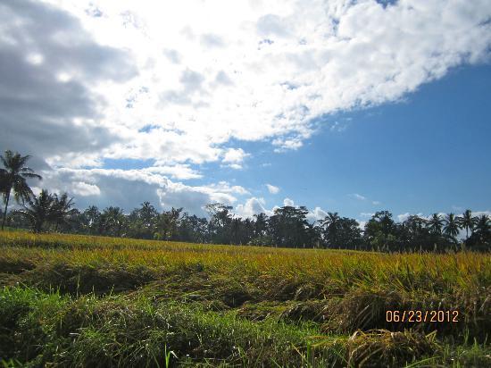 Villa Agung Khalia: View of the rice fields