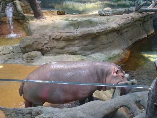Hippos Picture Of Adventure Aquarium Camden Tripadvisor