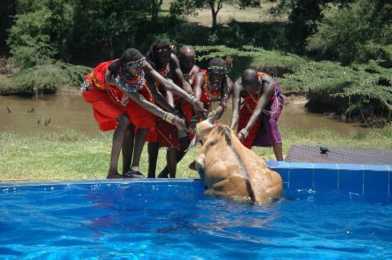Ngerende Island Lodge: Masai rescuing Namnak