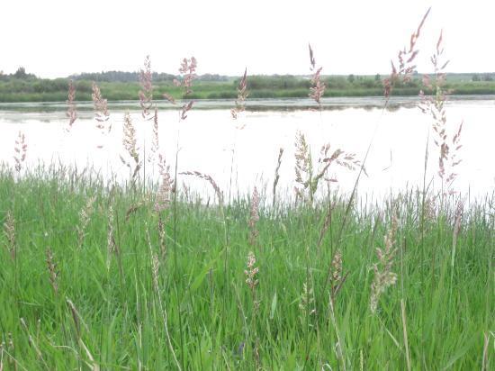 Prairie Bistro: View of Big Lake
