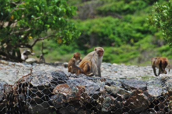 Barefoot Travelers Kayak Tour to Monkey Island: Mommy and baby