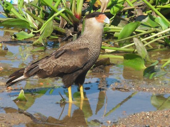 Estacao Natureza Pantanal: cara...