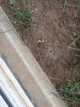 Ramada Oklahoma City Near Bricktown: sand burs all over, outside the sliding door