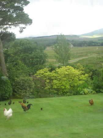 Netherdene Country House Bed & Breakfast: View from breakfast room!