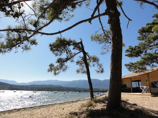 Camping Golfo di Sogno: Spiaggia del campeggio