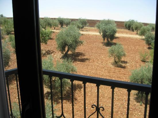 Guadalupe Hotel: Olive grove outside our room