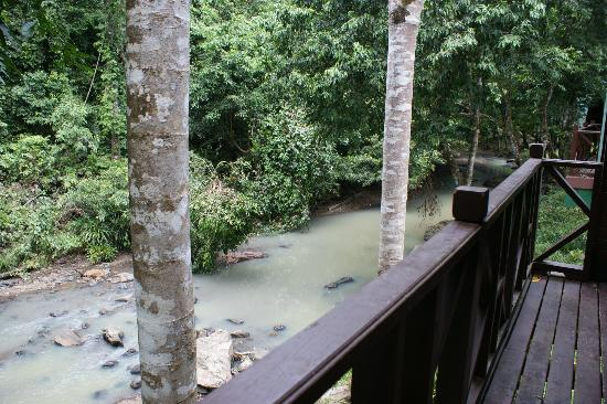 Tabin Wildlife Resort: my balcony - I had a macaque scurry down the tree opposite, and hornbills tapping on the window