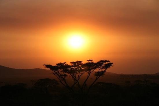 Serengeti Seronera Wildlife Lodge