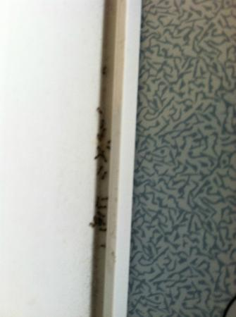 Holiday Inn Express Tampa - Rocky Point Island: Bugs on AC unit