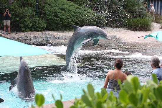 Sea World Tours Orlando