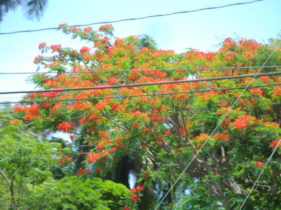 PPP Tran Tours Jamaica: Pretty tree