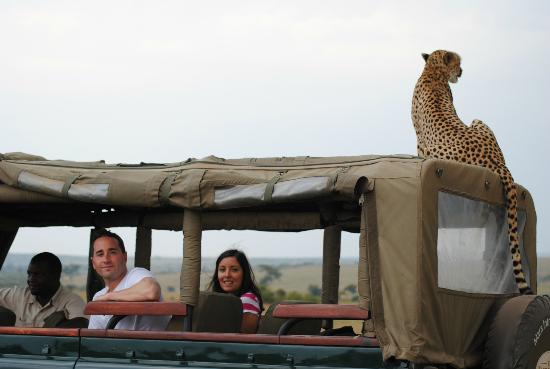 Mara Explorer Camp: Hitchhiker Cheetah