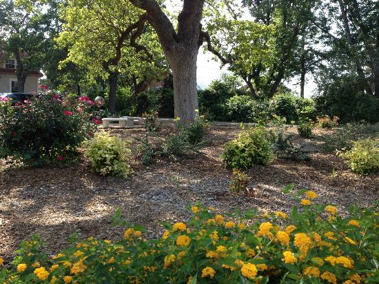 A Place In Time B&B: New landscaping with roses & lantana ...drip irrigation