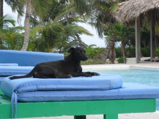 ‪‪White Sands Cove Resort‬: Chico chilling at the pool