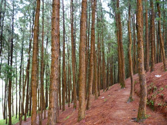 vagamon pine forest
