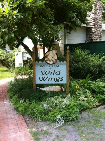 Honeoye Falls, NY: wild wings