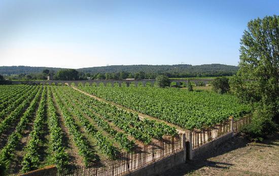 La Résidence du Château de Jouarres : View over Vineyard
