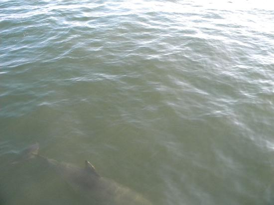 Cape May Whale Watch & Research Center : got a nice shot of one right by the boat!