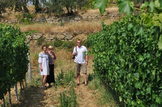 Relais La Torre: Vinmarkerne